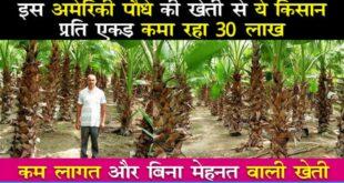 washinton palm tree farming