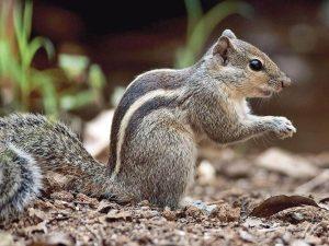 squirrel makes nest in bike